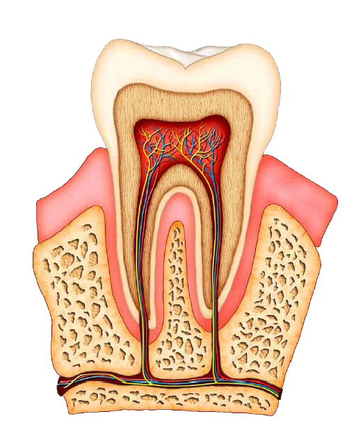 Root canal cost